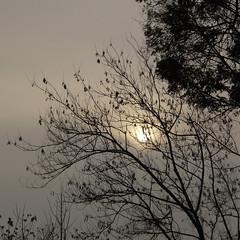 Cielo grigio su... (Paolo Barcucci) Tags: parco grigio milano albero autunno viacadore parcomarinaiditalia barcucci