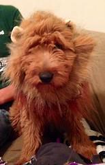 hudson-the-lion-at-4-months-old-_10629473185_o