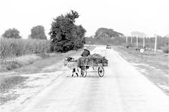 Guantnamo (province) (P-O Alfredsson) Tags: horse carriage cuba donkey mule kuba mula hst guantnamo sna krra guantnamoprovince