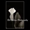 calla lily (wildlifephotonj) Tags: callalily callalillies callalilies flowerphotos flowerprints flower flowers fineartphotographs fineartprints fineartphotography fineart