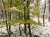 still clinging (vertblu) Tags: beech beechtree beechfoliage foliage leaves green yellowishgreen autumnfoliage autumn autumncolours autumncolouring suddenstartofwinter winter wintery wintry winterysnowy snow snowy snowcovered snowytrees firstsnow white greenwhite forest openforest woods woodland wood openwoodland inthewoods duvenstedterbrook nsgduvenstedterbrook naturschutzgebiet naturepreserve preservearea preservationarea hamburggermany november vert vertblu trees
