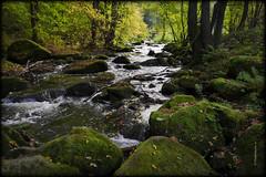 Quarksteine (Karabelso) Tags: water trees forest quarksteine wasser bach bäume wald moos natur naturschutz nature niedercrinitz sachsen steine stones
