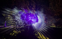 Westonbirt Enchantment III (ye sons of art) Tags: christmas xmas trees lights illuminations gloucestershire england uk forestrycommission winter westonbirt