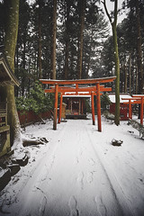 Kushihiki Shrine (chrsvga) Tags: japan photography art visuals tones shrine aomori tohoku hachinohe belief culture life snow nature outdoors visual concept composition religon landscape colors woods forest trees tree snowscape