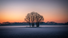 Treeline (MartinFechtner-Photography) Tags: winter snow schnee niederlande netherlands sunset sonnenuntergang bäume tree trees grafschaftbentheim nordhorn nebel fog goggy nebelig farbig clourful