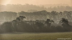 The Contrast Of Trees (Nick Fewings 4.5 Million Views) Tags: contrast mist trees markii 7d rebel eos canon nickfewings uk dorset rings badbury 2017 january landscape