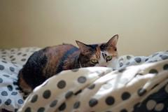 E Meow's life (Steve only) Tags: konica hexar rf cosina voigtlander cv nokton 50mm f15 aspherical 5015 m39 l39 leicascrewmount leicathreadmount ltm rangefinder fujifilm 富士業務紀錄用カラーフィルム100 100 film epson gtx970 v750 e喵 cats