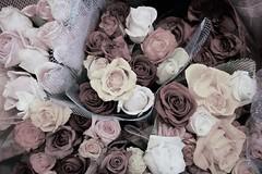 Vintage Bouquet (sarahellenspringer) Tags: roses process tint tone 7dwf flora flowers