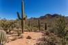 IMG_6362-Bearbeitet (dominikborsch) Tags: tucson arizona usa saguaros saguaronationalpark nature nationpark landscape landschaft desert wüste kaktus cactus