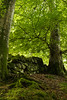 Queen Elizabeth Forest (starst0rm*<(*?*)>*) Tags: stirlingshire forest logs green scotland woodland
