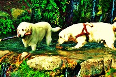 Making new friends at the park (luthomas) Tags: dogs animal nature outdoor water playing summer hot cane cani pero juego gioco aqua natura estate verano calor