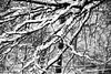 Snow Branches (Photographybyjw) Tags: snow branches loaded down with wet this picture after an overnight storm north carolina photographybyjw rural country black white