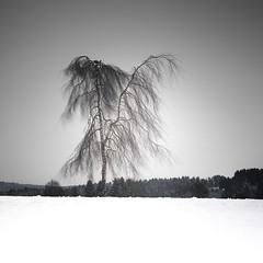 the poetry of trees (ArztG.|Photo) Tags: life is beautiful arztg|photo winter tree poetry