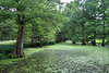 Greenville - Cypress Creek (Drriss & Marrionn) Tags: bluestrail2014 greenville mississippi outdoor bayou swamp nature preserve green tree trees cypresstrees water creek plant plants landscape usa greenvillecypresspreserve