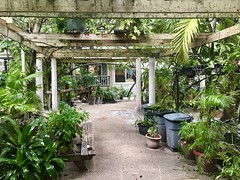 Tortola, BVI, Caribbean (- Adam Reeder -) Tags: adam reeder adamreeder coconutbarometer kk6gpv awesome cool photo photography personal travel wwwkk6gpvnet areed145 patio greenhouse garden y2017 m01 d12 lat180 lon650 anderson british virgin islands jpg apple iphone 7 tortola bvi caribbean mosquitonet carousel barberchair jackfruit turnstile lumbermill slidingdoor koala potted plant