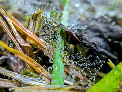 Morning dew (Blagovest Penev) Tags: dew morning cold summer sun water nature grass green wet beauty macro closup