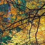 Nature's Stained-not-Glass-Window thumbnail