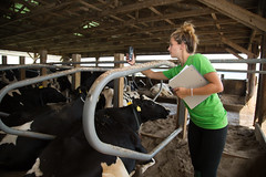 Web Series Photos (UDCANR) Tags: lab cows farm grow commons dairy understand animalscience dairycows websitehomepage environmentalmanagement sidealignedsubject anfs111 anfs111fa14 photoforlesagriffiths drlihong