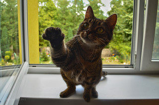 Lenka's paw �