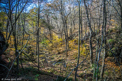 Secret Falls looking back over the glen watermarked (Joshua Banks Photography) Tags: wisconsin nikon bestofthemidwest discoverwisconsin d5200 midwestlivingmagazine wisconsinphotographers joshuabanks nikond5200 joshuabanksphotography joshuabanks2015