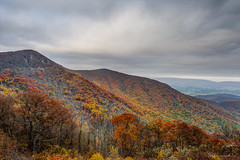Shenandoah National Park / Foliage (Nikographer [Jon]) Tags: fall virginia nationalpark october oct foliage va np shenandoahnationalpark 2015 snp nikographer 20151024d4202873