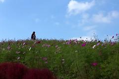秋桜 (michio1975) Tags: blue autumn sky girl hill bluesky 秋 少女 コスモス 秋桜 青空 丘 秋空 こすもす