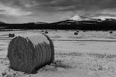 IMG_6116bw (b_jw40) Tags: winter snow aberdeenshire aberdeen bennachie