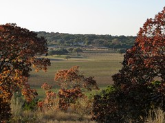 Driftwood Estate Vineyards (zug55) Tags: autumn fall vineyard texas winery driftwood texashillcountry centraltexas driftwoodvineyards driftwoodestatewinery driftwoodestatevineyards