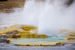 Erupting Geyser at Fountain Paint Pots (Kayla Stevenson) Tags: uppergeyserbasin water usa steam yellowstonenationalpark geyser wyoming fountainpaintpots