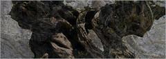 """The tree of awe "" - Oneiric Surreal art (eftim ristov) Tags: art oneiric sureal paintings"