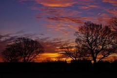 Gaudete (Sundornvic) Tags: sunrise sunday light sky clouds colour gold red orange trees silhouette shropshire shrewsbury advent