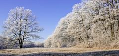 159- Ein Märchenwald (heriholz) Tags: wald baum bäume schnee raureif himmel wiese