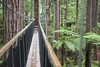 IMG_8960 copy (AsianInsights) Tags: newzealand northisland asiapacific holiday nature 2016 december fern ferntree forest rotorua forestresearchinstitute research redwoods redwood treewalk redwoodforest