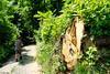 il tronco e il montanaro (Clay Bass) Tags: 1855 roccavione bole fuji green man natural path trees wood xt1