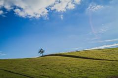 (c) Wolfgang Pfleger-0662 (wolfgangp_vienna) Tags: schweden sweden sverige schonen southsweden kseberga ystad sandhammaren blue sky blau himmel felder