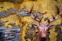 deer on wood (primemundo) Tags: dogwood dogwood2017 ruleofthirds deer peeling cracking flaking antlers wood
