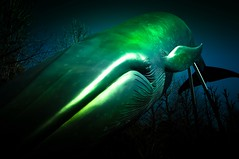 Tokyo whale (veik88) Tags: whale tokyo sea japan green pentaxk touristatractions bluewhale sculpture