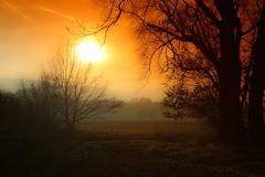 Wintertage (yarin.asanth) Tags: landscape januar sunset sundown sonnenuntergang bäume landschaft winterstimmung gerdkozik yarinasanth lakeconstance höri moos iznang bodensee orange