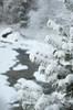 (Sous l'Oeil de Sylvie) Tags: arbre tree conifère sentier riviere river neige snow enneigé sousloeildesylvie pentax ks2 hiver winter décembre december parcdes7chutes stgeorges beauce québec