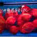 Red+Fish+at+Fish+Market+at+Kowloon+-+Hong+Kong