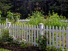 ... (Jean S..) Tags: fence flowers garden park day outdoor nature green white pink