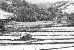 The Barn (Alan-Taylor) Tags: littondale barn snow fallingsnow yorkshire yorkshiredales blackandwhite monochrome