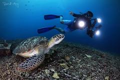 Look!!! (Randi Ang) Tags: gili meno gilimeno giliislands lombok indonesia underwater scuba diving dive photography wide angle randi ang canon eos 6d fisheye 15mm randiang