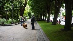 Parque de  San Francisco (Jusotil_1943) Tags: sombreo perro arboles entrearboles parque oviedo bordillos curb escenas urbanas