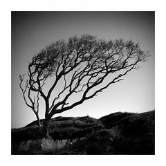 Fort Fisher (Joe Franklin Photography) Tags: blackandwhite almostanything tree silhouette minimal minimalistic joefranklin wwwjoefranklinphotographycom northcarolina carolina nc coast fort historic