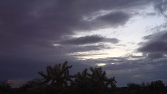 sOLACE sOUGHT iN a sONORAN sTORM 30 (wNG555) Tags: 2017 apachejunction apachetrail superstitionmountain superstitionwilderness sonorandesert desert cactus sky storm clouds winter olympusfzuikoautos38mmf18 arizona phoenix