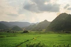 Mountains and Rice Paddies, Son La Vietnam (AdamCohn) Tags: 075kmtobnmayinsnlavietnam adamcohn bnmay snla sơnla vietnam geo:lat=21406710 geo:lon=103767421 geotagged hills karst mountains wwwadamcohncom chiềngpấc
