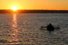 05. Rowing at sunset (Misty Garrick) Tags: sandiegoca sandiego sunset sandiegosunset boat pirate pirateboat