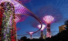 Gardens by the Bay 01 (brentflynn76) Tags: city trees light urban gardens skyline architecture night garden bay singapore colorful neon grove colourful supertree supergrove