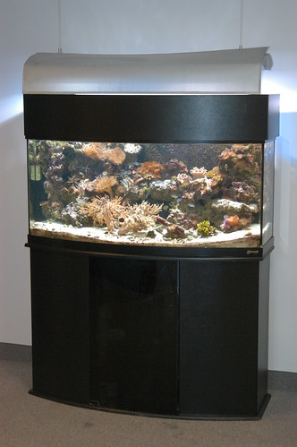 150 Gal Off The Shelf Living Reef - Corporate Office - CT